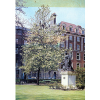 Queen Charlotte Statue & tree colour postcard