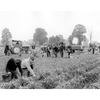 Farming in the field Chalfont